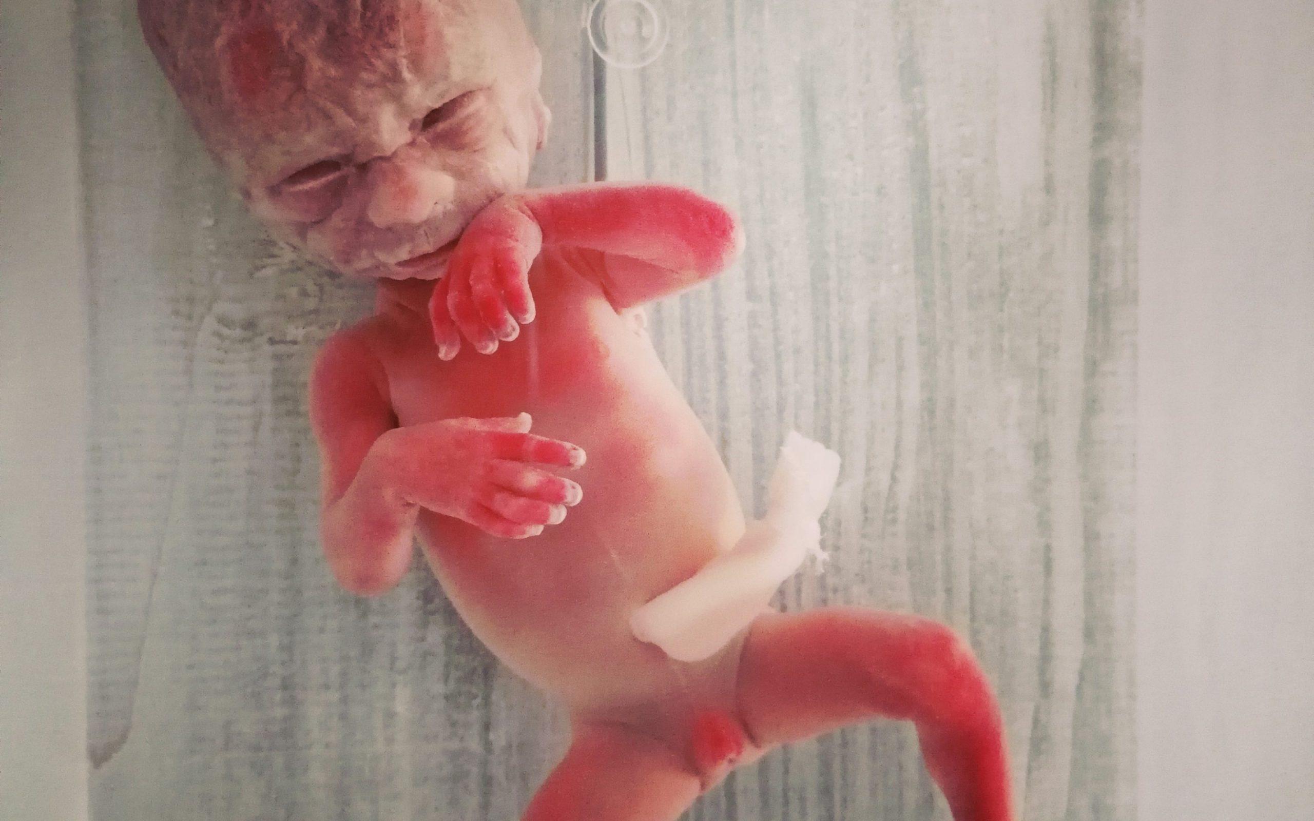 Baby 14 5e-foto-2880x1800